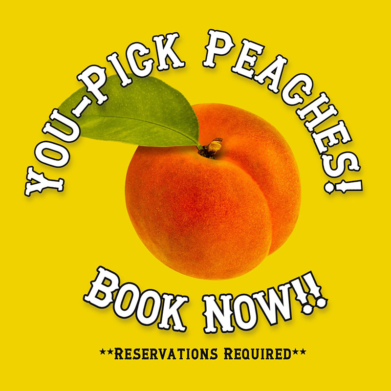 You pick peaches by reservation only